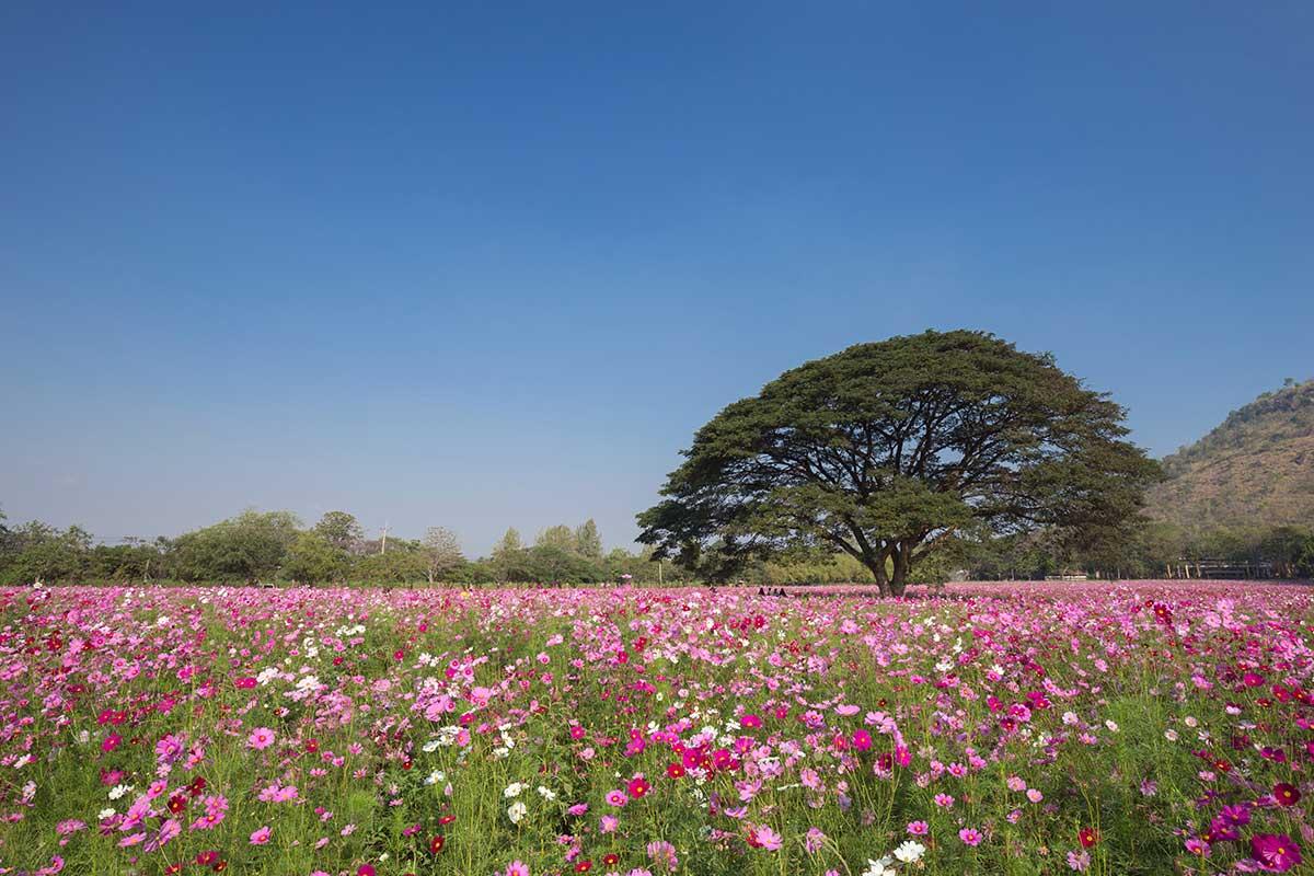 victoria ou les racines pelees Arbre fleurs sauvages - Annie Wattier Généalogie